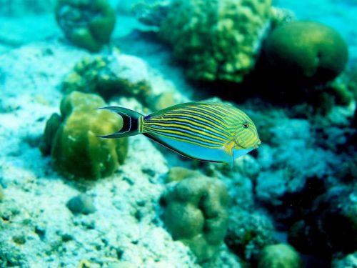 Aquarium Reef in Port Barton, Palawan
