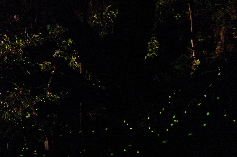 Firefly Watching, one of many activities in Puerto Princesa, Palawan